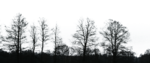 Black Tree PNG Image icon png