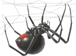 Black Widow Spider PNG Transparent Image icon png