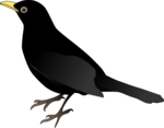 Blackbird PNG Clipart icon png