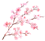 Blossom PNG Transparent Images icon png