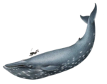 Blue Whale PNG File icon png