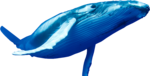 Blue Whale PNG Pic icon png