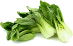 Bok Choy PNG Photos icon png