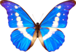 Butterfly Transparent PNG icon png