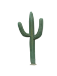Cactus PNG icon png