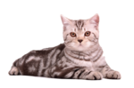 Cat Sitting PNG icon png
