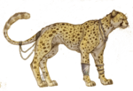 Cheetah PNG Picture icon png