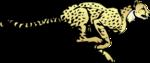 Cheetah PNG Transparent Image icon png