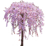 Cherry Tree PNG Clipart icon png