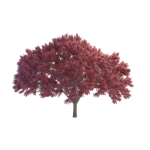 Cherry Tree PNG File icon png