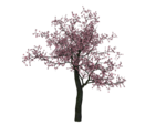 Cherry Tree PNG Image icon png