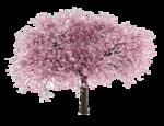 Cherry Tree icon png