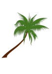 Coconut Tree PNG Free Download icon png