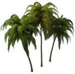 Coconut Tree PNG Photos icon png