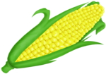 Corn On Cob Clip Art PNG icon png
