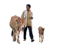 Cow PNG Image icon png