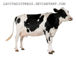 Cow PNG Photos icon png