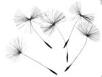 Dandelion PNG Photo icon png