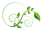 Decorative Leaf PNG File icon png