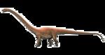 Diplodocus Transparent Background icon png