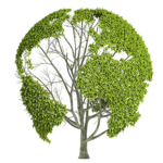 Earth Nature PNG Image icon png