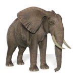 Elephant PNG Image icon png