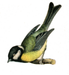 Fairy Bird PNG Clipart icon png