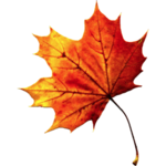 Fall Autumn Leaves Transparent PNG icon png