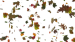 Falling Leaf PNG Image icon png
