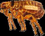 Flea PNG Transparent Image icon png