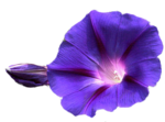 Flowers PNG Transparent Image icon png