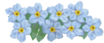 Forget Me Not PNG HD icon png