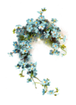 Forget Me Not PNG Image icon png