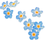 Forget Me Not PNG Transparent icon png
