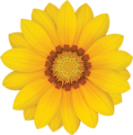 Gazania Transparent PNG icon png