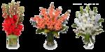 Gladiolus PNG Image icon png