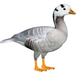 Goose PNG File icon png