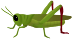 Grasshopper PNG Clipart icon png