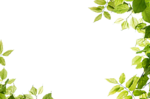 Green Background PNG Transparent Image icon png