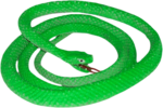 Green Snake PNG Image icon png