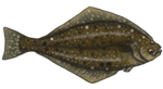 Halibut PNG Image icon png