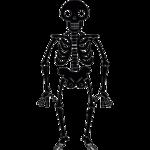 Halloween Skeleton Transparent PNG icon png