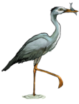 Heron PNG Transparent icon png