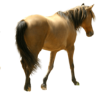 Horse PNG File icon png