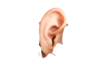 Human Ear PNG Image icon png