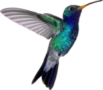 Hummingbird PNG File icon png