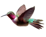 Hummingbird PNG Transparent HD Photo icon png