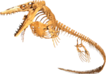 Ichthyosaur PNG Background Image icon png