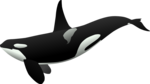 Killer Whale Background PNG icon png