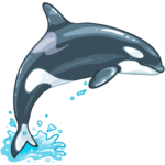 Killer Whale PNG File icon png